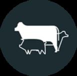 Ons vlees